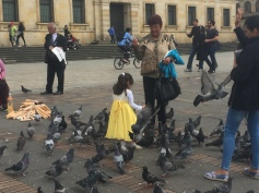 Way too many pigeons for my liking